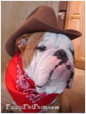 bulldog-in-hat-2.jpg
